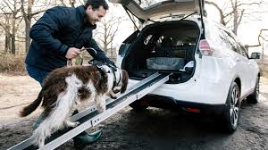 nissan qashqai dog guard nissan x trail 4dogs is for dogs