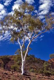 up a gum tree the meaning and origin of this phrase