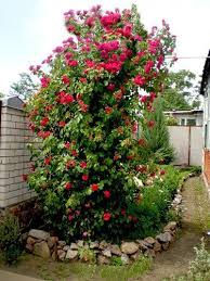 Beautiful Backyard Designs by 25 Vertical Landscaping Ideas Adding Spectacular Centerpieces To