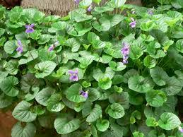 medicinal plants taxform me