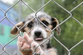 cani in cerca di casa regala una casa a un amico a 4 ze comune di mogoro sito