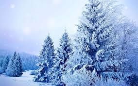 nature snow landscapes seasons snowflakes winter trees snowing