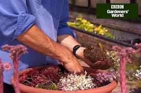 video guide rock garden in a trough gardenersworld com