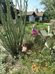blackfoot native plants schwilk lab native plants for lubbock gardens