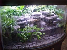 Aquascape Designs For Aquariums Best 25 Axolotl Tank Ideas On Pinterest Fish Tank Fish Tanks