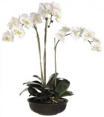 silk orchids white silk phalaenopsis silk orchid arrangement orlho465 floral