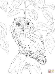 eastern screech owl coloring page free printable coloring pages
