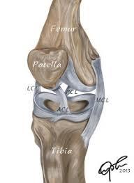 Interactive Knee Anatomy Anatomy Of The Human Knee U2013 Chuba Oyolu U0027s Portfolio