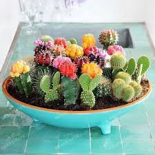 2017 multifarious ornamental plants 100 mixed cactus seeds