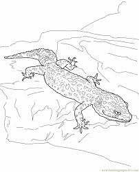 leopard gecko lizard coloring page free lizard coloring pages