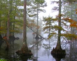 Louisiana natural attractions images 21 most beautiful places to visit in mississippi the crazy tourist jpg