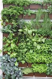 wondrous living wall garden project vancouver herb wall living