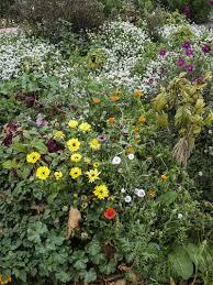 native plants christchurch let u0027s grow a healthy garden city u2013 making christchurch