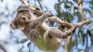 list of australian native plants australia u0027s animals tourism australia