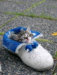 20 reasons a cat is the best investment you u0027ll ever make huffpost