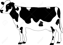 cattle clipart holstein cow pencil and in color cattle clipart