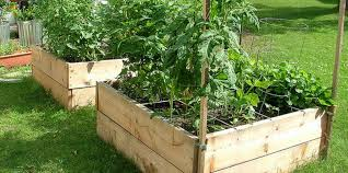 vegetable container gardening for beginners why should we
