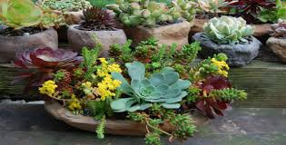 creative container gardening ideas of worthy images about creative