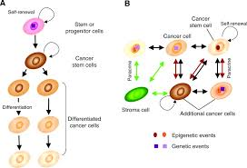 integrins in mammary stem cell biology and breast cancer