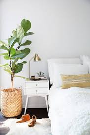 Home Decorating Plants Best 25 Bedroom With Plants Ideas On Pinterest Plants Indoor