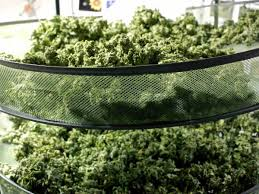 proper lights for growing weed drying and curing marijuana for maximum taste potency scent weight