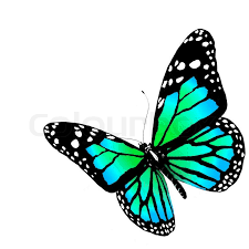 isolated butterfly on a white background stock photo colourbox