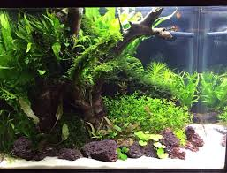 Aquascape Chicago 114 Best Aquariums Images On Pinterest Aquascaping Aquarium