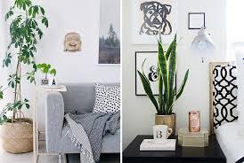 plante verte dans une chambre à coucher quelle plante mettre dans chaque pièce de la maison