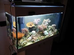 vasche acquario vasca per acquario marino acquari di casa