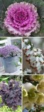 9649 best winter plants images on pinterest winter plants