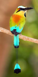 best 25 pretty birds ideas on pinterest beautiful birds
