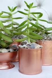 best 25 copper planters ideas on pinterest mini plants copper