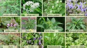 cuisine plantes sauvages cuisine de plantes sauvages les saisons de la vallée
