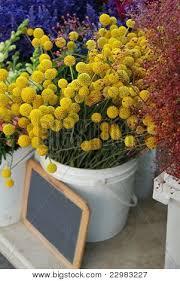 Yellow Pom Pom Flowers - little yellow pom pom flower bucket marry it pinterest