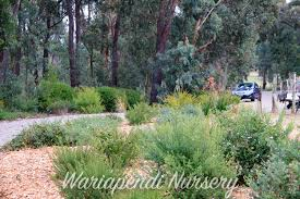 noosa native plants plants for sandy soils native plant and revegetation specialists