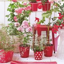 pflanzen fã r den balkon urlaub zu hause balkonien traumurlaub auf 4 quadratmetern