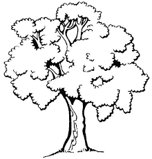 apple tree coloring page 77 best coloring trees u0026 leaves images on pinterest coloring