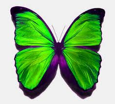 green butterfly soul butterfly symbolism and