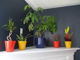 amazing benefits of indoor plants