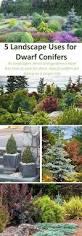 best 25 evergreen shrubs ideas on pinterest shrubs landscaping
