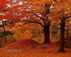 curtains autumn colors fall series u2013 cinnamon turmeric