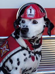 history fire dogs lives u0027ve saved rover