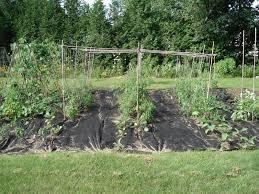 garlic harvest and more goodseed09 u0027s blog