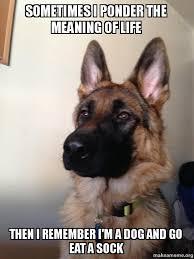 Ponder Meme - sometimes i ponder the meaning of life then i remember i m a dog and