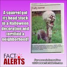 squirrels head stuck in halloween decoration