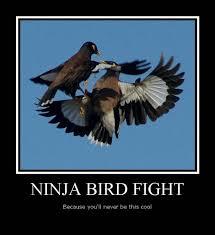 Meme Bird - meme ninja bird fight photo golfian com