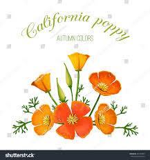 vector illustration flower arrangement california poppy stock