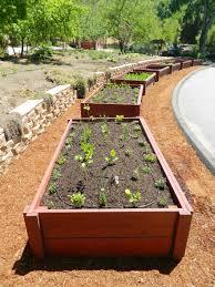 summer veggie garden planting u2014 carmichael environmental