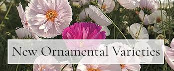 Flowers Of The Month List - national garden bureau ngb inspire connect grow