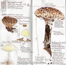 drawing u0026 painting mushrooms u2014 scratchmade journal
